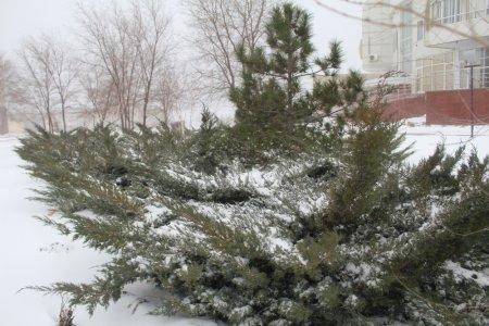 Снег в Актау. Фотопост