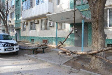 В Актау упавшее дерево повредило машину