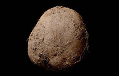 За миллион долларов продал снимок картофелины ирландский фотограф