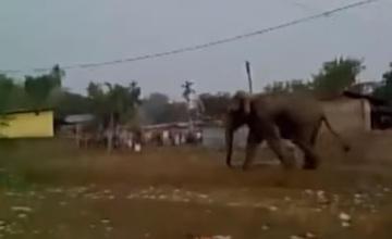 Слон разрушил около сотни домов в индийском городе Силигури