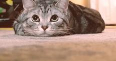 Японский автопроизводитель снял соцрекламу о кошках