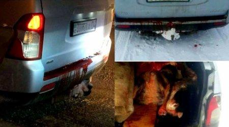 Тайну кровоточащего автомобиля раскрыли в Актобе