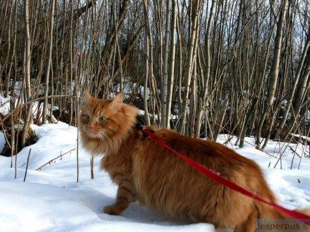 Ездовой кот из Норвегии покорил интернет-пользователей