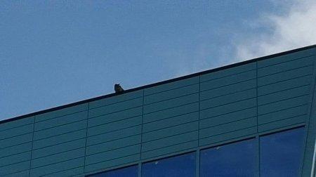 Помогите снять котенка с крыши