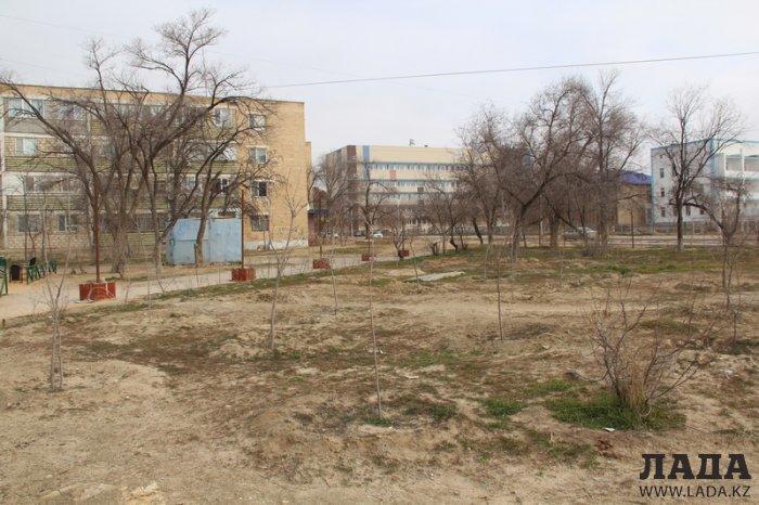 Жители 1 микрорайона Актау возмущены застройкой земельного участка и вырубкой зелёных насаждений