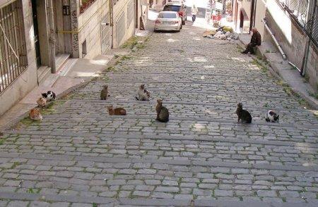 В Актау 1 марта отмечают День кошек