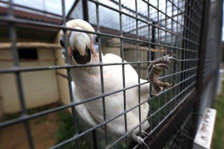 Одинокий костромич украл попугая-собутыльника