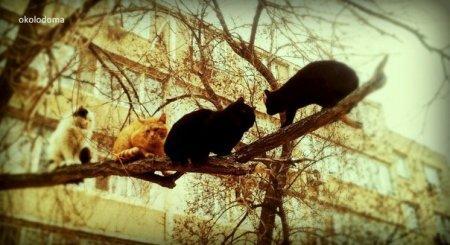 Мартовские коты в #Aktau