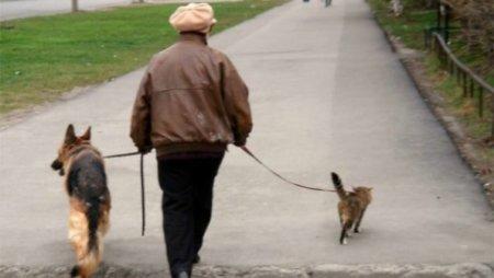 Правила выгула собак с паспортом и справкой о прививках распространяются только на Астану