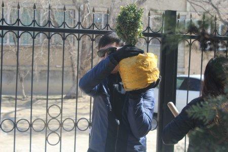 Сотрудники административного суда Актау высадили саженцы вместо вырубленных деревьев