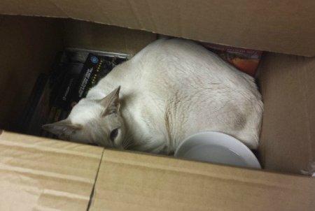 Кошка по кличке Капкейк неделю провела в почтовой посылке и выжила