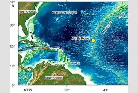 В коре Земли под толщей океана найдена жизнь