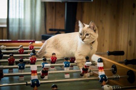 В алматинской гостинице рассказали о трудовых буднях работниц-кошек