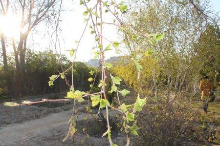 Цветущий апрель в Актау. Фотопост