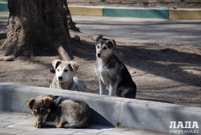 За нарушение правил содержания собак за неделю оштрафованы 45 жителей Мунайлы
