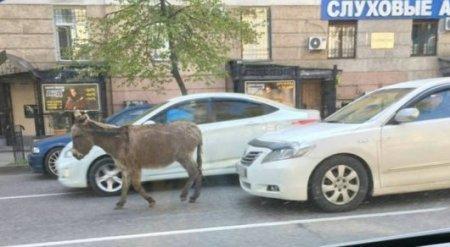 Одинокий ослик разгуливал по улицам Алматы