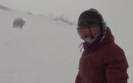 Сноубордистка не заметила, как сняла гнавшегося за ней медведя