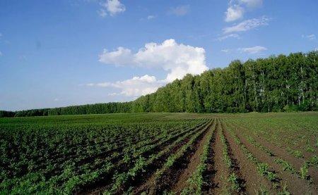В каких регионах Казахстана самая дорогая земля