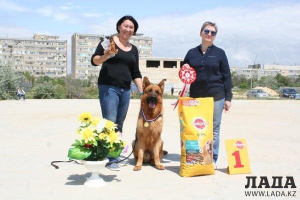 Немецкая овчарка по кличке Mein Stern Vargas стала победителем ежегодной монопородной выставки в Актау