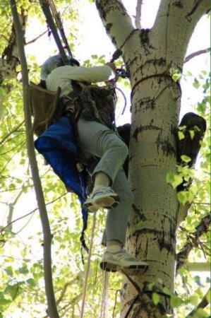 Унесенная ветром: в ВКО спасли повисшую на дереве парашютистку