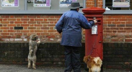 Британцы разобрали все заявления на ирландское гражданство в почтовом офисе