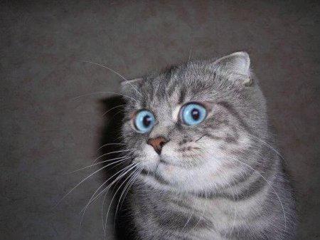 В США кот взял в заложники своих хозяев