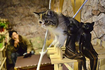 Пользователи сети спасли династию кошек от выселения из музея