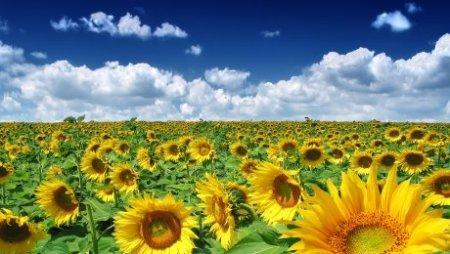 Каким будет июль 2016 - прогноз погоды