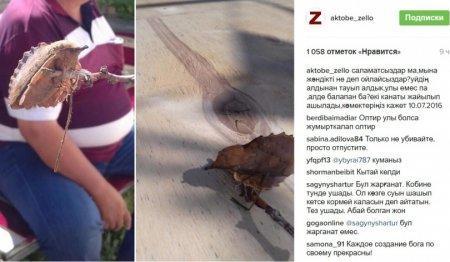 Фото странного существа вызвало жаркие споры в Интернете среди актюбинцев