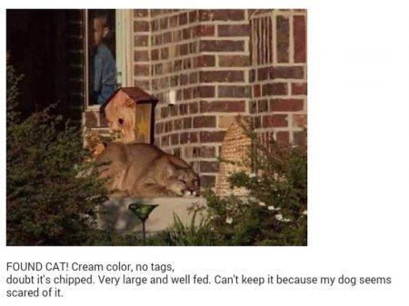 Американец принял найденную возле дома пуму за домашнюю кошку