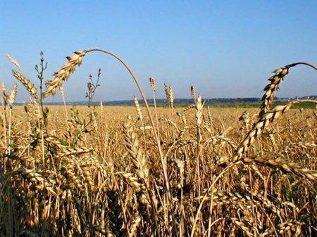 Ужесточить ответственность за незаконное распределение земель предложили в РК