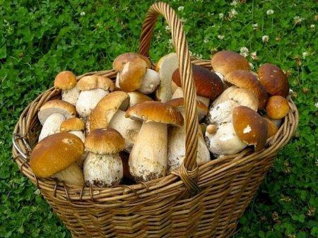 Туристы из России засолили грибы в ванне пятизвездочного отеля в Швейцарии