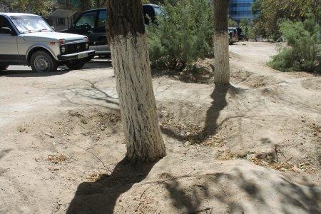 Жители Актау жалуются на отсутствие полива деревьев в городе