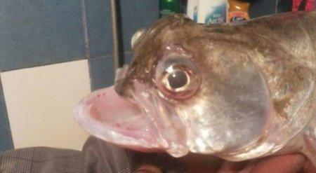 Рыбу-урода поймал житель Атырау