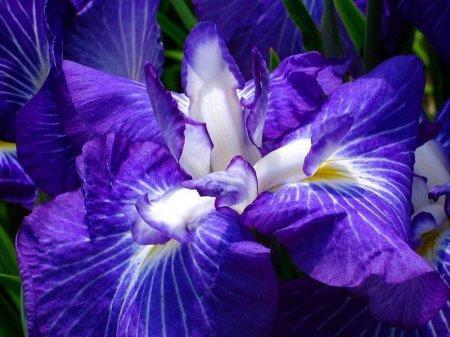 Фиолетовые цветы дарят скучные мужчины – ученые