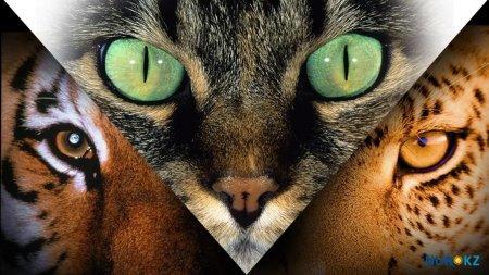 Казахстанский ученый: Инопланетяне следят за человечеством при помощи кошек