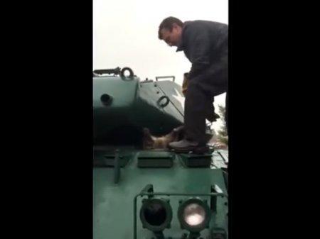Упитанный енот застрял в танке вверх тормашками