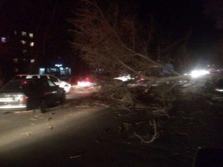 Тараз накрыл сильный ураган: повалены десятки деревьев, разрушено здание университетаz