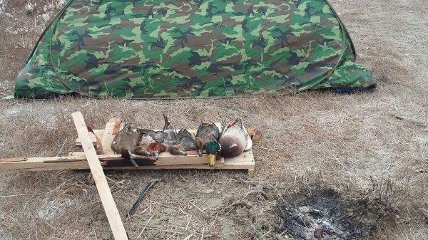 Сезон охоты в Мангистау продлится до 15 февраля
