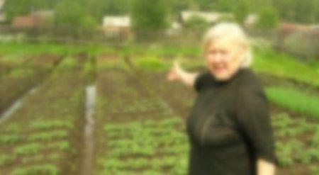 Пенсионерка вырастила клубнику на месте, где закопала убитого мужа