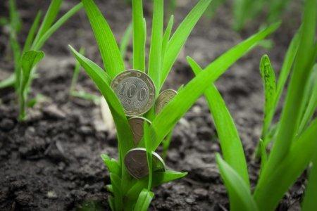 В РК предложено ввести прогрессивный налог на «неработающие» земли
