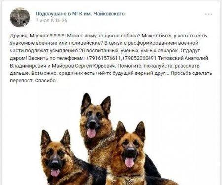 Мошенники крадут у казахстанцев деньги, рассказывая о несчастных овчарках