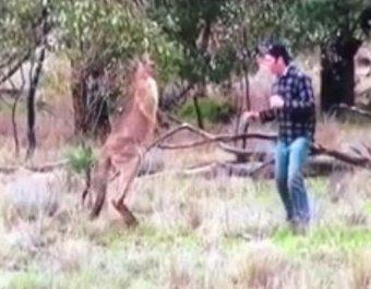 """YouTube """"взорвало"""" ВИДЕО с австралийцем, отбившим врукопашную у кенгуру свою собаку"""