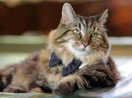 Пропал самый старый кот в мире