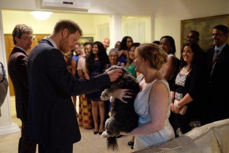 Принц Гарри познакомился с собакой из Астаны