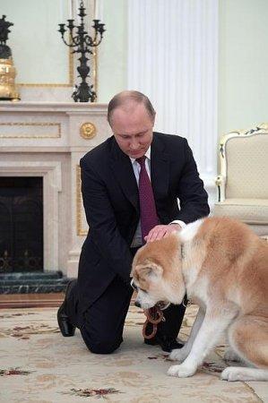 Собака Путина Юмэ испугала японских журналистов